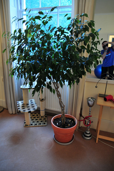 TreeMoving-07.jpg