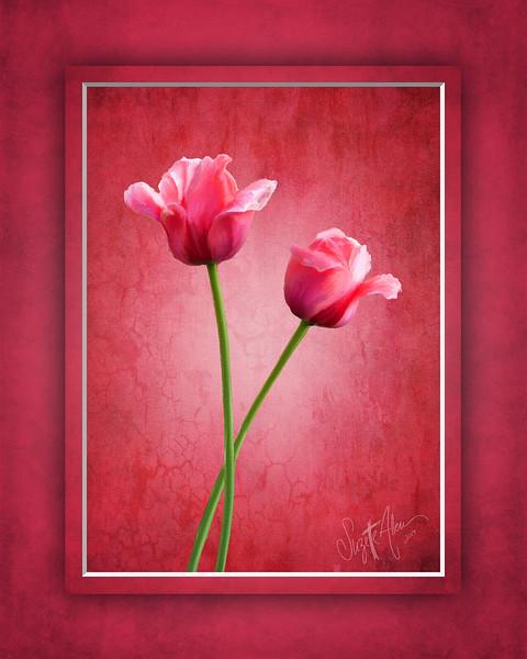 Tulip Buddies 2 8x10.jpg