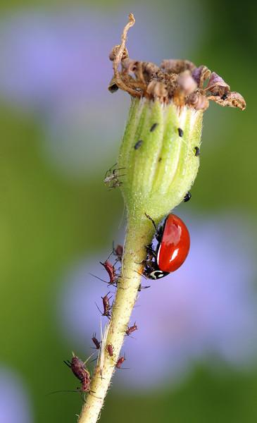 lady bug 7.jpg