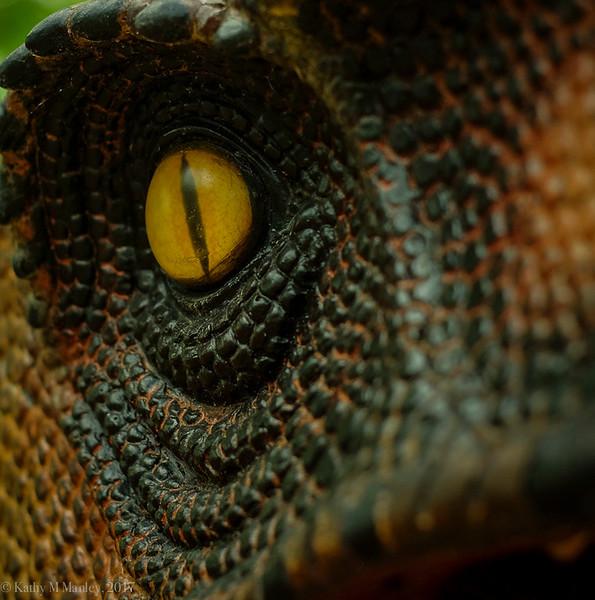 Dinolandss-28.jpg