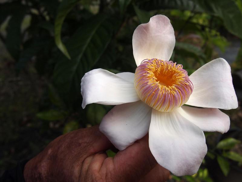 Beautiful-Flower-Oahu.jpg