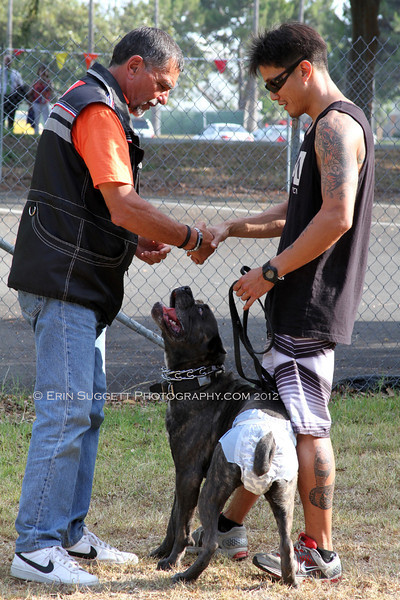 """Judge, Dominique Piton, greets Tex Kim & Cielo (in """"Heat"""" panties) for CSAU.  A multitude of temperment evaluation tests take place at the  SCABR French Ring trial in Long Beach, CA on July 13, 2012  © Erin Suggett Photography 2012 - All Rights Reserved"""