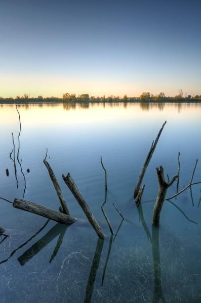 Sticks - Secchia river detention basin (Casse di espansione del Secchia) - Campogalliano, Modena, Italy - October 29, 2012