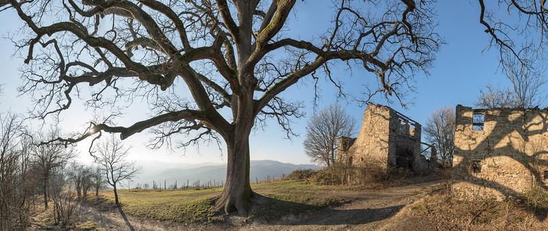 La Grande Quercia (The Big Oak) - Scandiano, Reggio Emilia, Italy - February 1, 2015