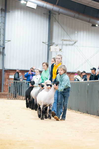 SW District Sheep Shows 2021