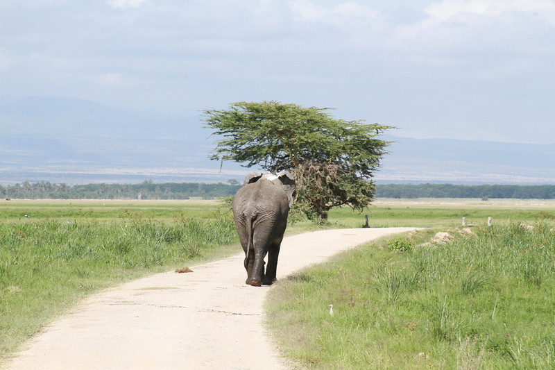 Kenya 2019 #2 872.JPG