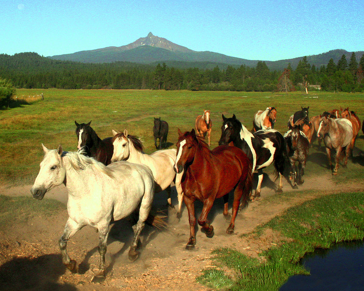 horses coming to work IMG_5968_ktk.jpg
