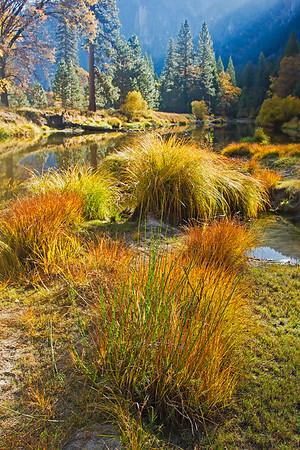 Yosemite Fall Colors Oct. 2013