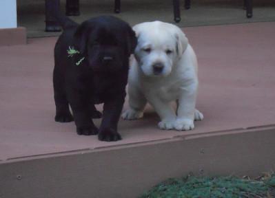 Lexi Puppies June 14