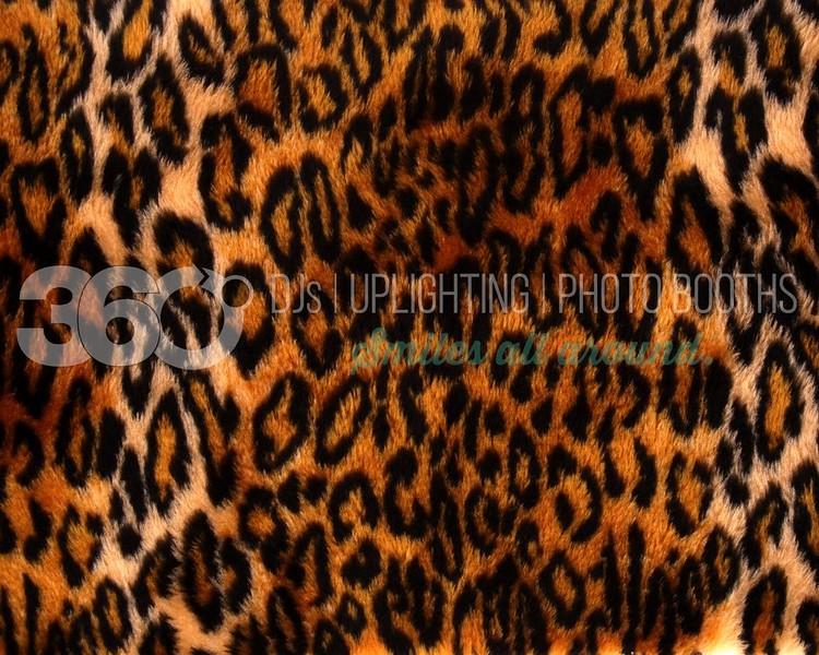 Leopard_batch_batch.jpg