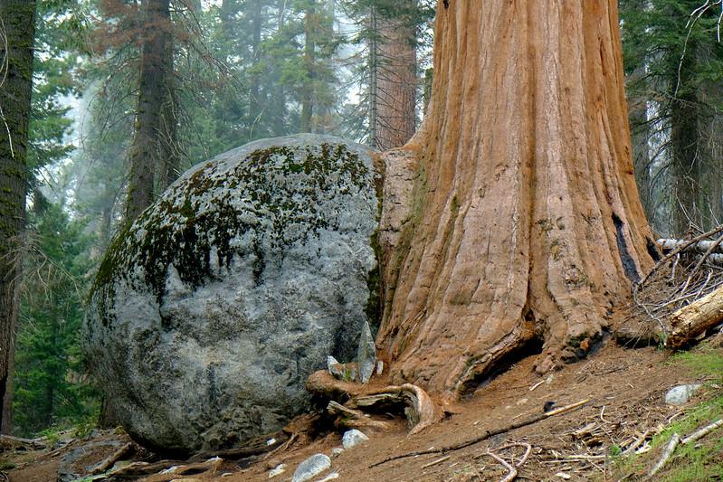 California Day 6 Sequoia 05-30-2017 105.JPG