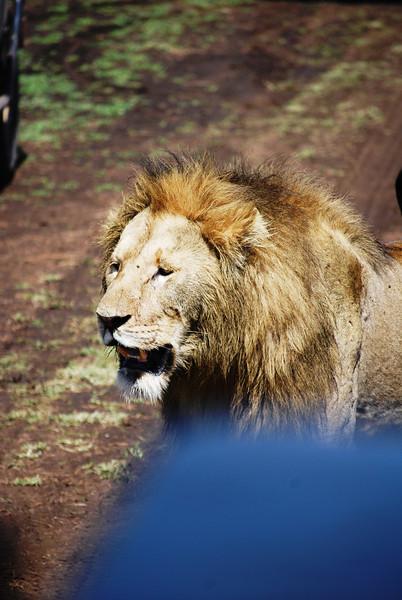 Ngorongoro (106).JPG