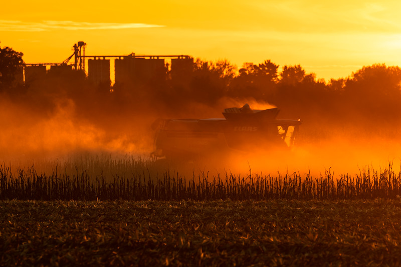 Harvest 2018 Sunset