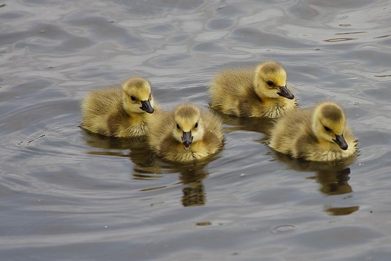 Taken at the University of Oklahoma Duck Pond