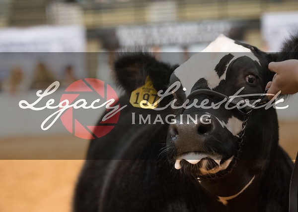 Market Cattle