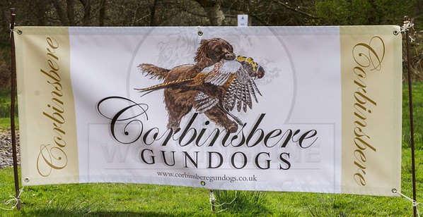 CORBINSBERE GUNDOGS SPRING WORKING TEST 2016