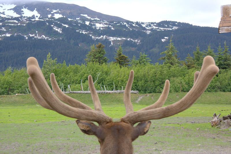 Elk's-eye-view