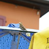 St-Gingolph_Montreux_270720140026