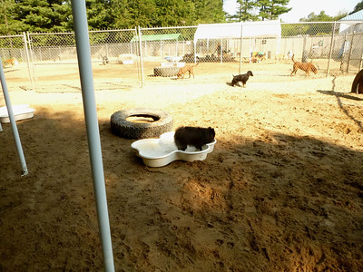 All Dogs Gym 08-21-2013