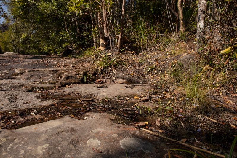 Utricularia graminifolia at Phu Kradueng National Park (Thai: อุทยานแห่งชาติภูกระดึง) in Loei Province, Thailand.