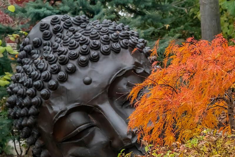 Contemplating autumn