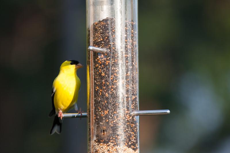 1106_birds_095.jpg