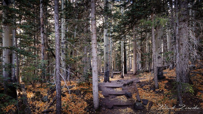 Flagstaff Lockett Meadow Basin Trail Fall 2019