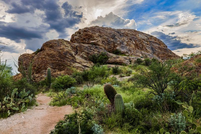 Javelina Rocks In Repose