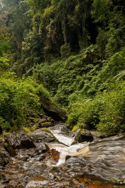 Nyugwe-Rwanda-32.jpg