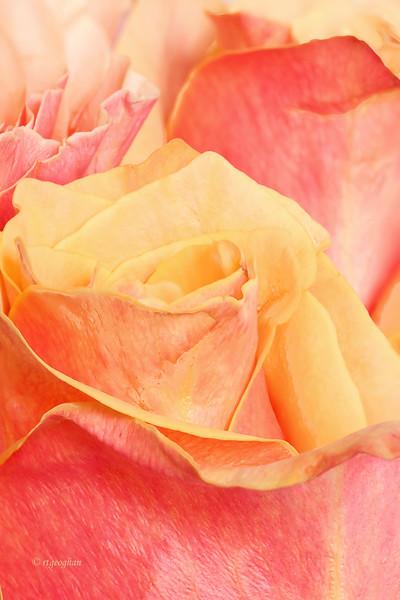 Mar 1_Rose Impressions.jpg