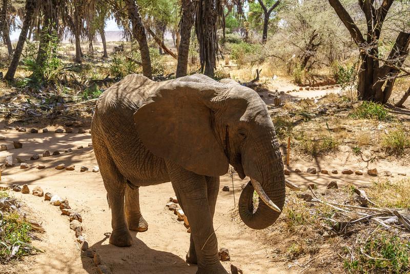 Kenya 2015-01675.jpg