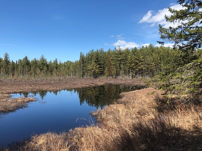Algonquin Hike and Moose Watching • May 4, 2019