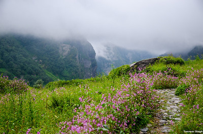Hemkunt Sahib and Valley of flowers 2012