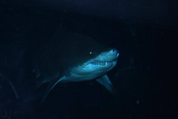 Adventure Aquarium 08.18.09