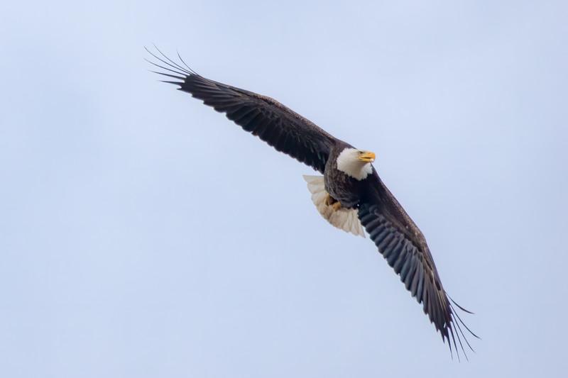 Eagle  1AE No WM-6.JPG