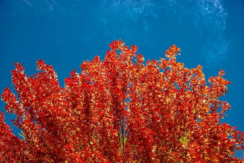Ashland_Fall Colors-1.jpg