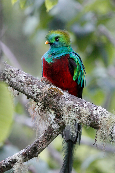 CostaRica-Savegre Birds