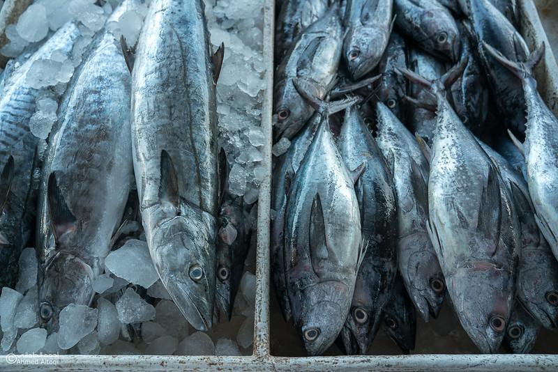 DSC04828- fish market - Muscat.jpg