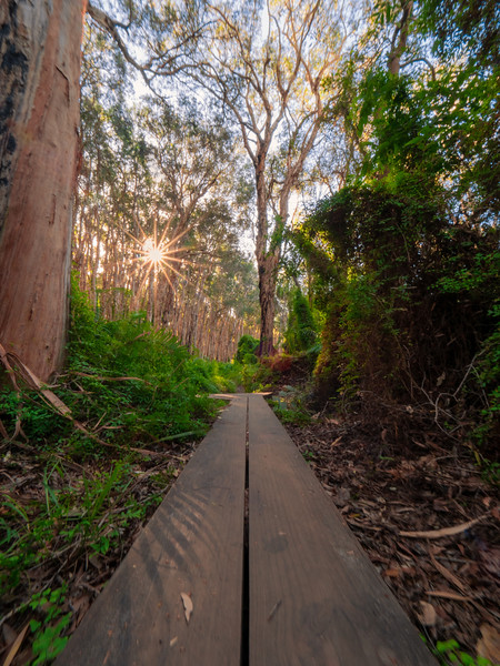 Paperbark Forest Walk - Agnes Water