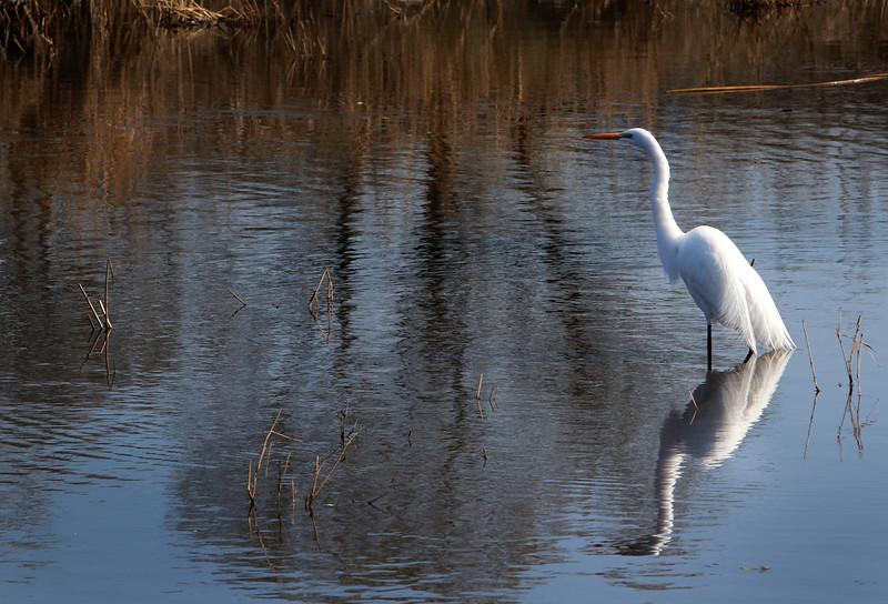 Laguna Egret.jpg