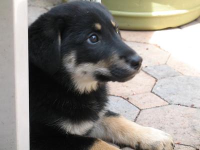 georgia rescue pups