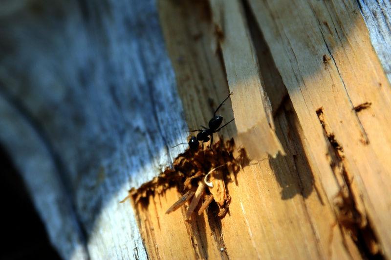 ant on a log.jpg