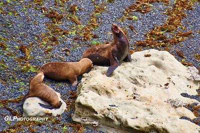 Cruise 1_13 Puerto Madryn Sea Lions