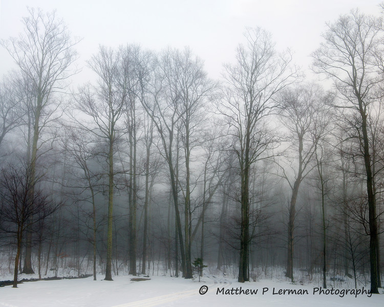 372 Fog Trees 16x20 lowres.jpg