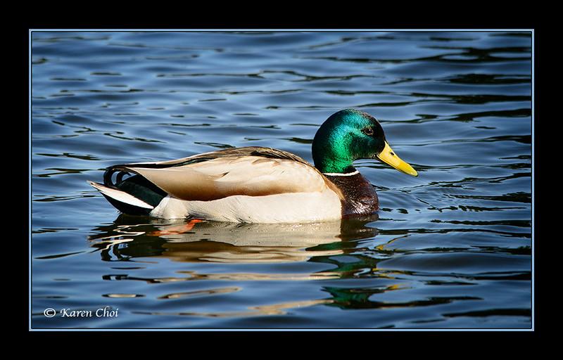 sm Duck 2.jpg