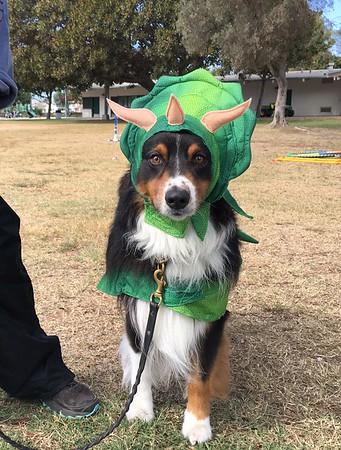 2019 Puppy Picnic