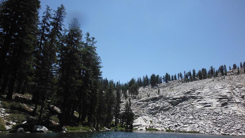 sequoia 083.JPG
