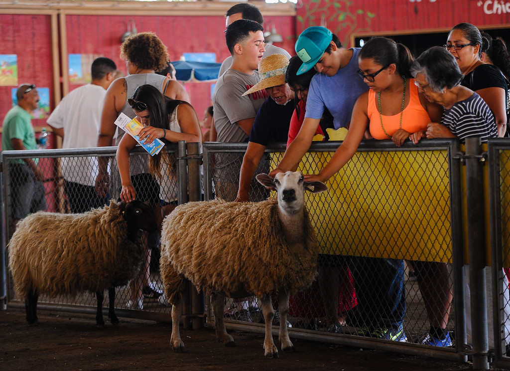 . Fair-goers visit with livestock at the 91st annual Los Angeles County Fair in Pomona on Sept. 2, 2013. The fair will run through September 29. (Rachel Luna / San Bernardino Sun)