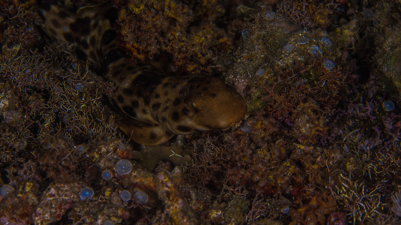 Taken at Pantai Falajawa divesite in Ternate Island, North Maluku, Indonesia during our 8D7N excursion in March 2018