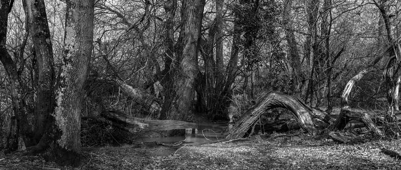 Knepp Woodland Stream-13.jpg